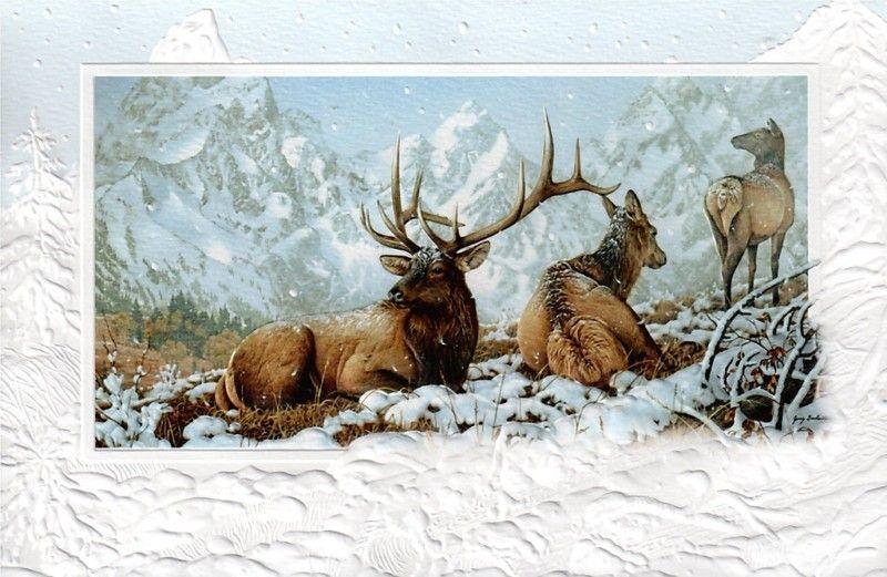 16 Boxed Embossed Christmas Cards Elk Wapiti